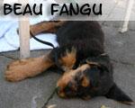 BeauFangu