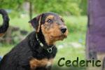 Cederic