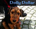 S_Dolly_Dollar