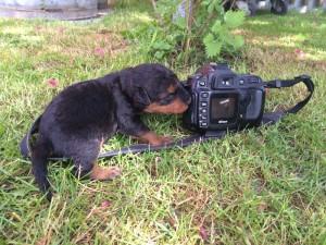 ab jetzt übernimmt Pinki das Fotografieren