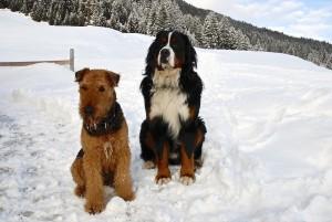 20. Februar 2010 Alpe Almein
