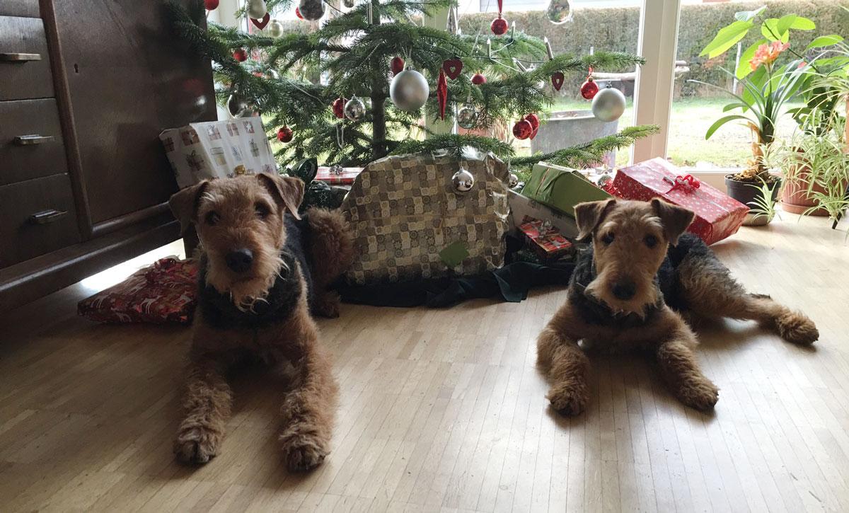 Weihnachtshunde