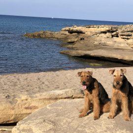 Nachträglich: Sonnige Grüße aus Sardinien!
